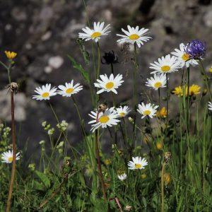 flowers-3491493_1280pixa