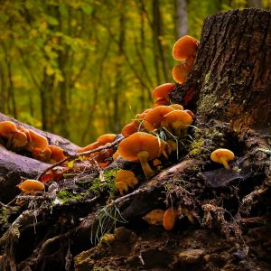 mushroom-411732_1280pixa