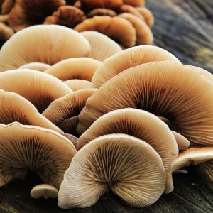 mushroom-4557852_1280pixa