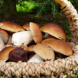 mushrooms-3686917_1920